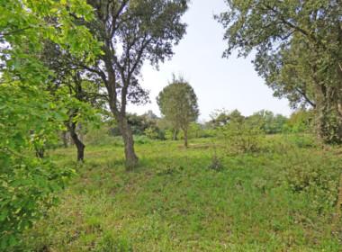grimaud-terrain-constructible-300-m-du-village-070416-144118p1060804