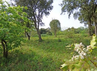 grimaud-terrain-constructible-300-m-du-village-070416-144118p1060806